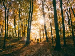 Prepare Your Mind and Body for Seasonal Change with These Fall Activities