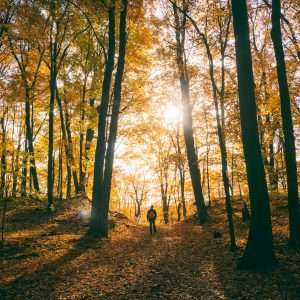 Fall Activities for Mind-Body Wellness